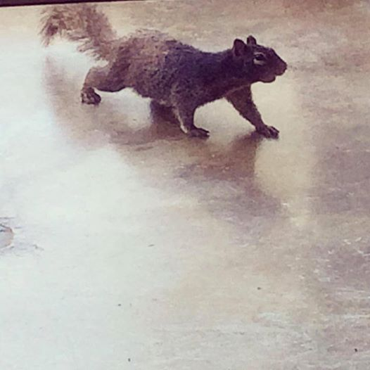 Leonard the Squirrel keepin' us company