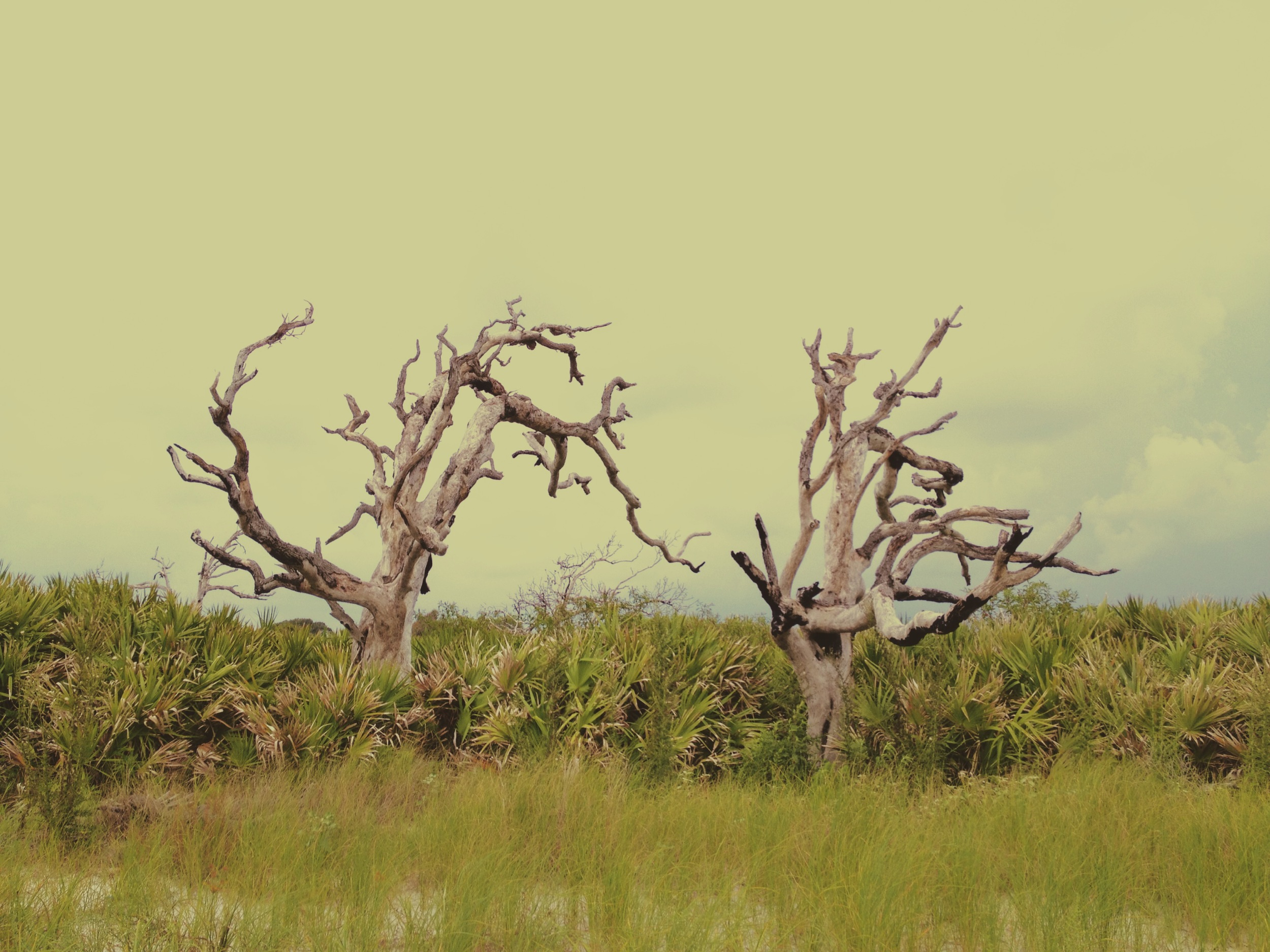 Driftwood / Blackbeard Island National Wildlife Refuge 2014 © Manda Faye Dunigan