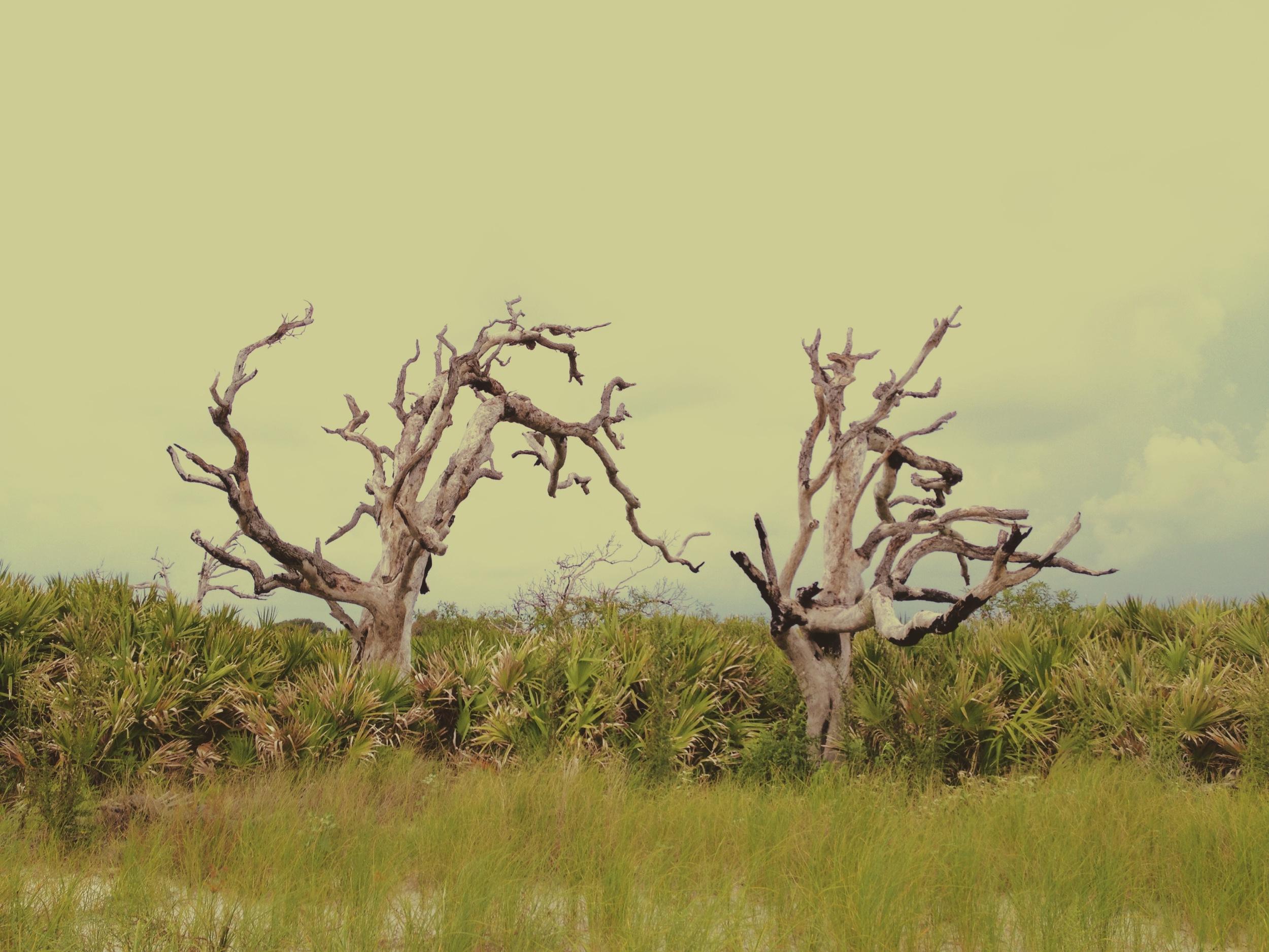 Driftwood / Blackbeard Island National Wildlife Refuge 2014 © Manda Faye Dunigan