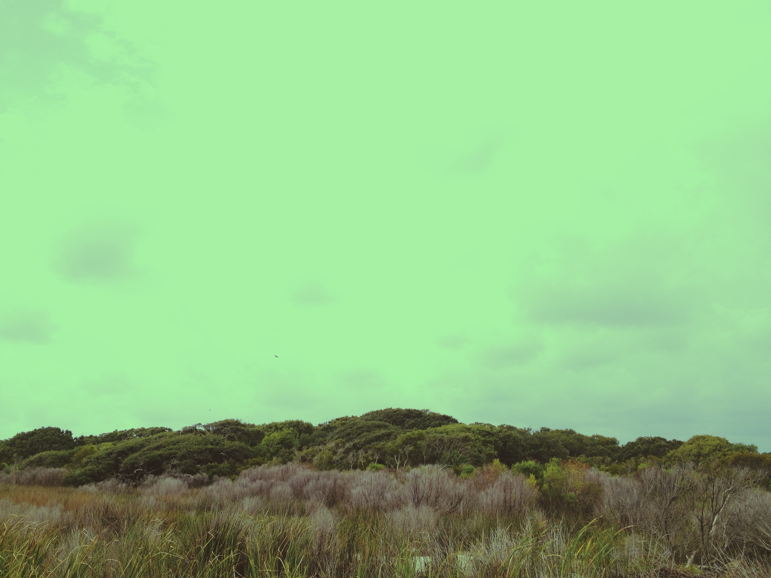 Forest / Blackbeard Island National Wildlife Refuge 2014 © Manda Faye Dunigan