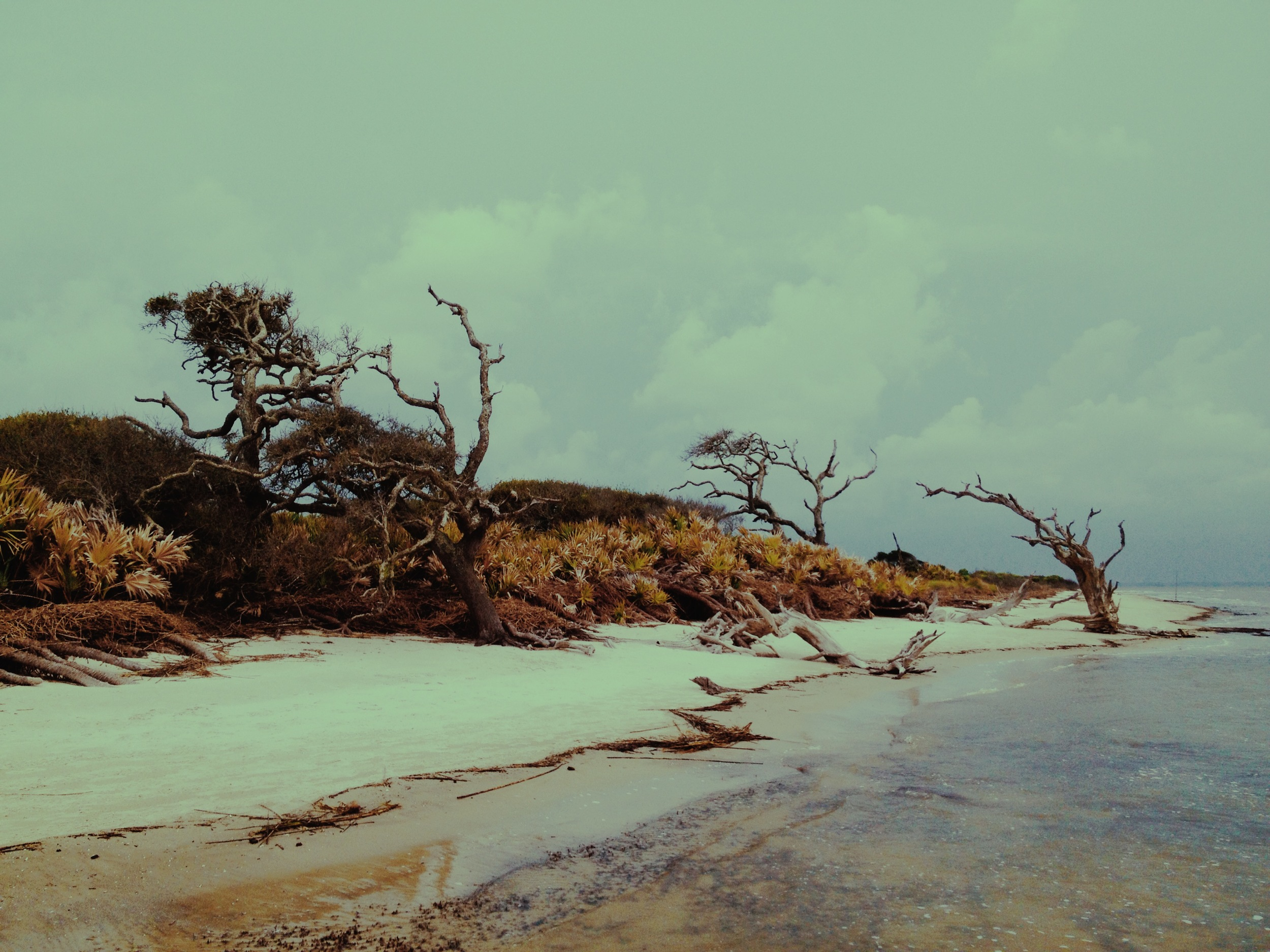 Cedars / Blackbeard Island National Wildlife Refuge 2014 © Manda Faye Dunigan