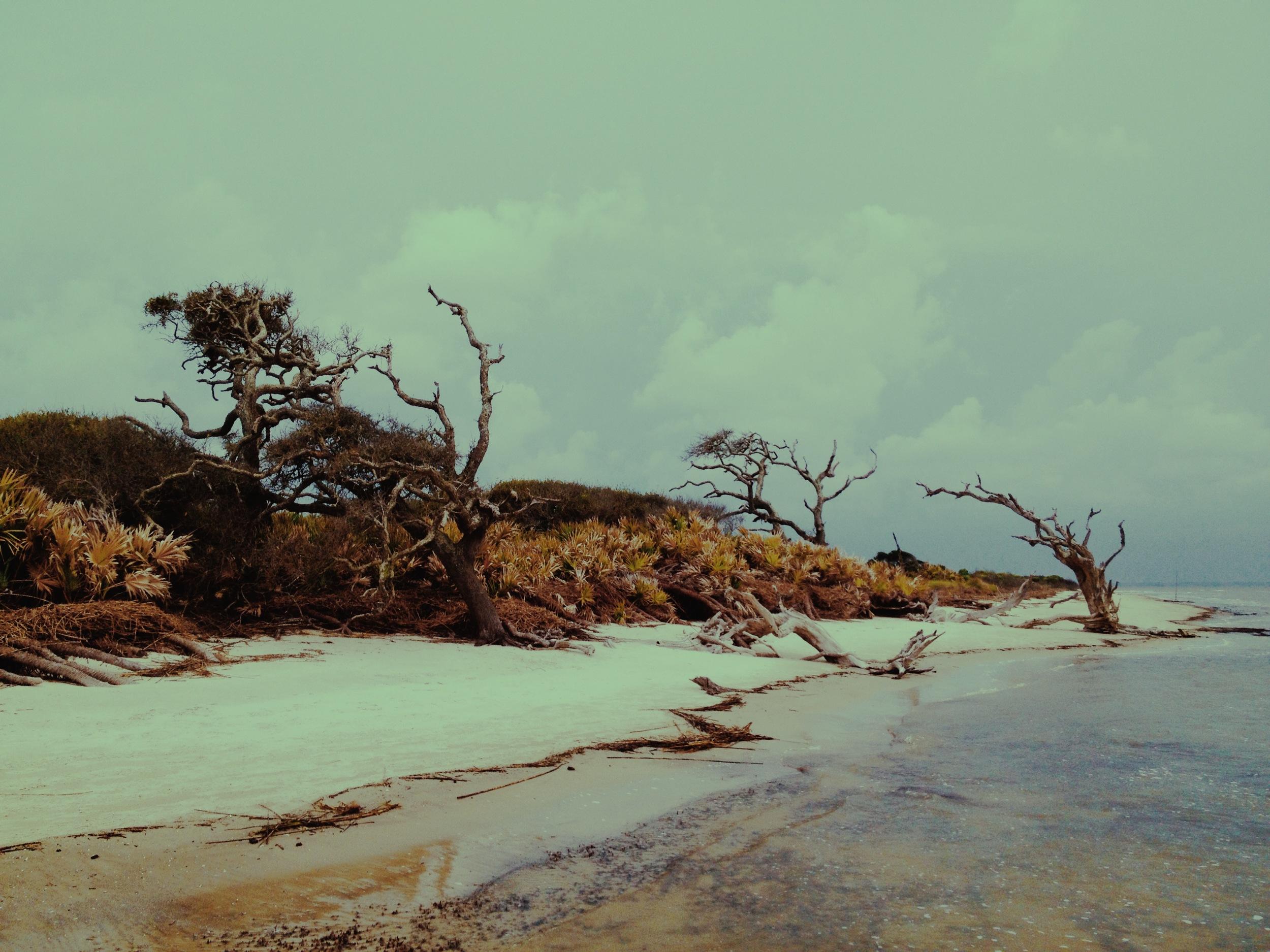 Cedars / Blackbeard Island National Wildlife Refuge 2014 © Manda Faye Dunigan