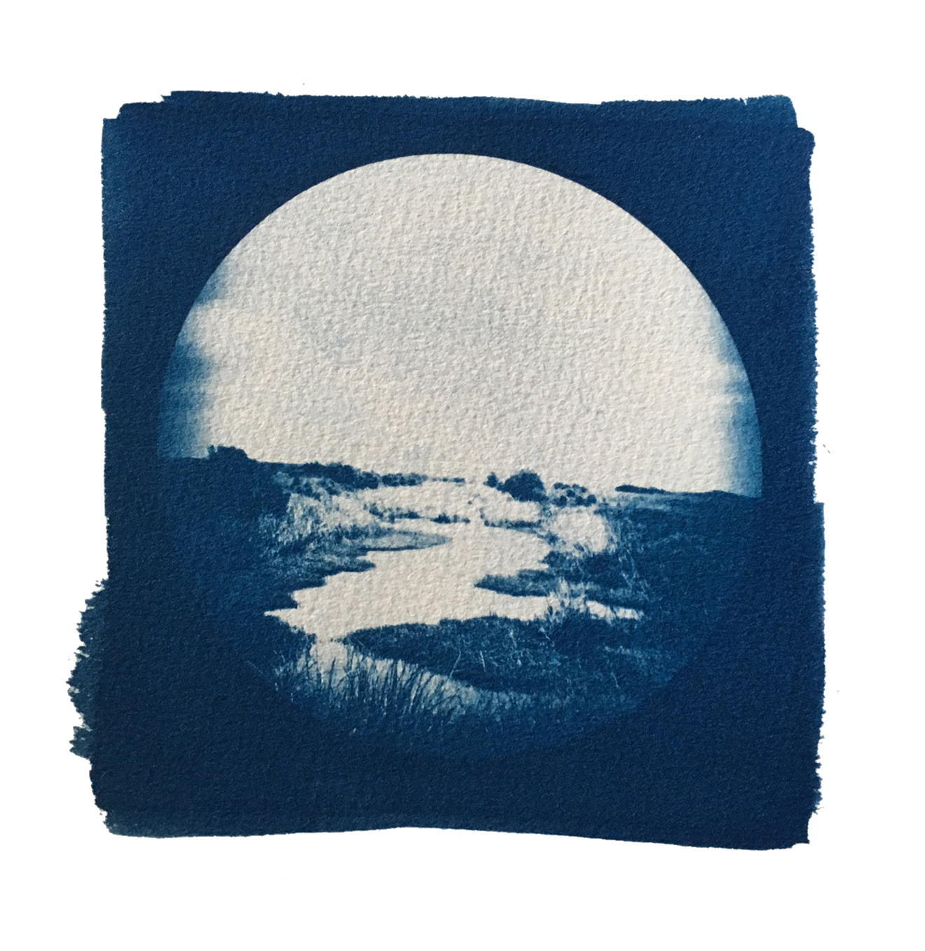 "TITLE /  Partner With the Sun No. 6  MEDIUM /  Cyanotype Print, Printed on 100% Cotton Paper  SIZE /  7"" x 7""  PRICE /  $200.00"