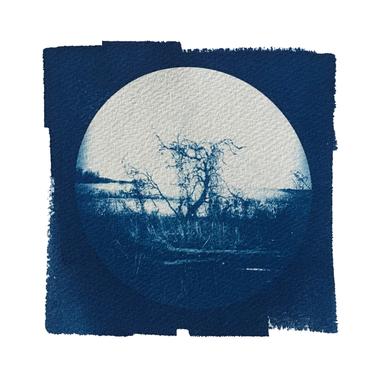 "TITLE /  Partner With the Sun No. 5  MEDIUM /  Cyanotype Print, Printed on 100% Cotton Paper  SIZE /  7"" x 7""  PRICE /  $200.00"