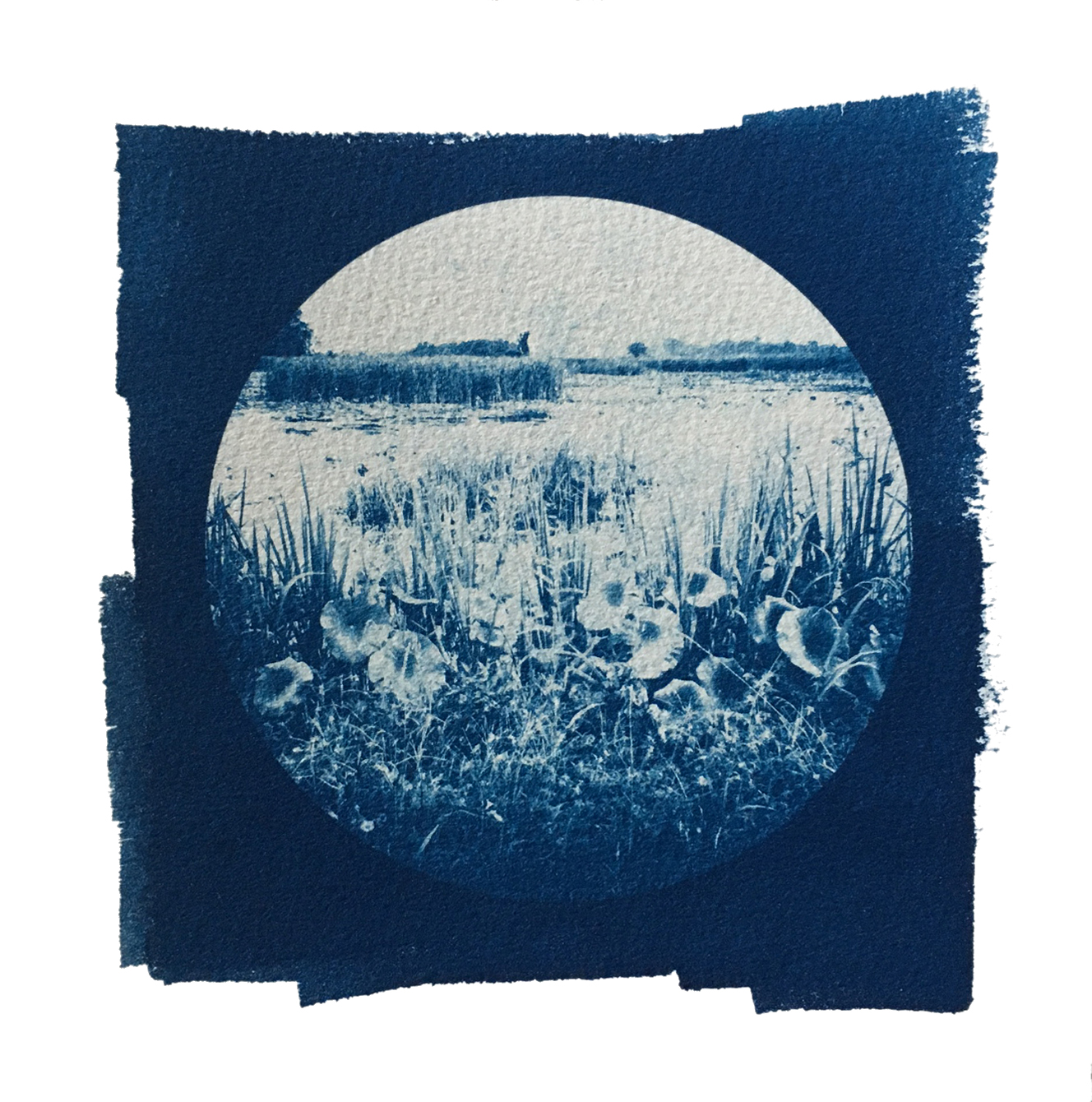 "TITLE /  Partner With the Sun No. 7  MEDIUM /  Cyanotype Print, Printed on 100% Cotton Paper  SIZE /  7"" x 7""  PRICE /  $200.00"