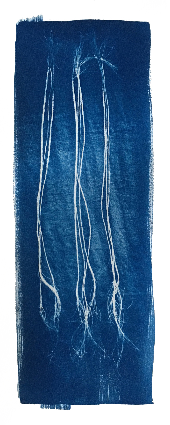 "TITLE /  Plaited Sabal Minor, No. 2  MEDIUM /  Cyanotype Print, Printed on 100% Cotton Paper  SIZE /  7"" x 16""  PRICE /  $350.00"