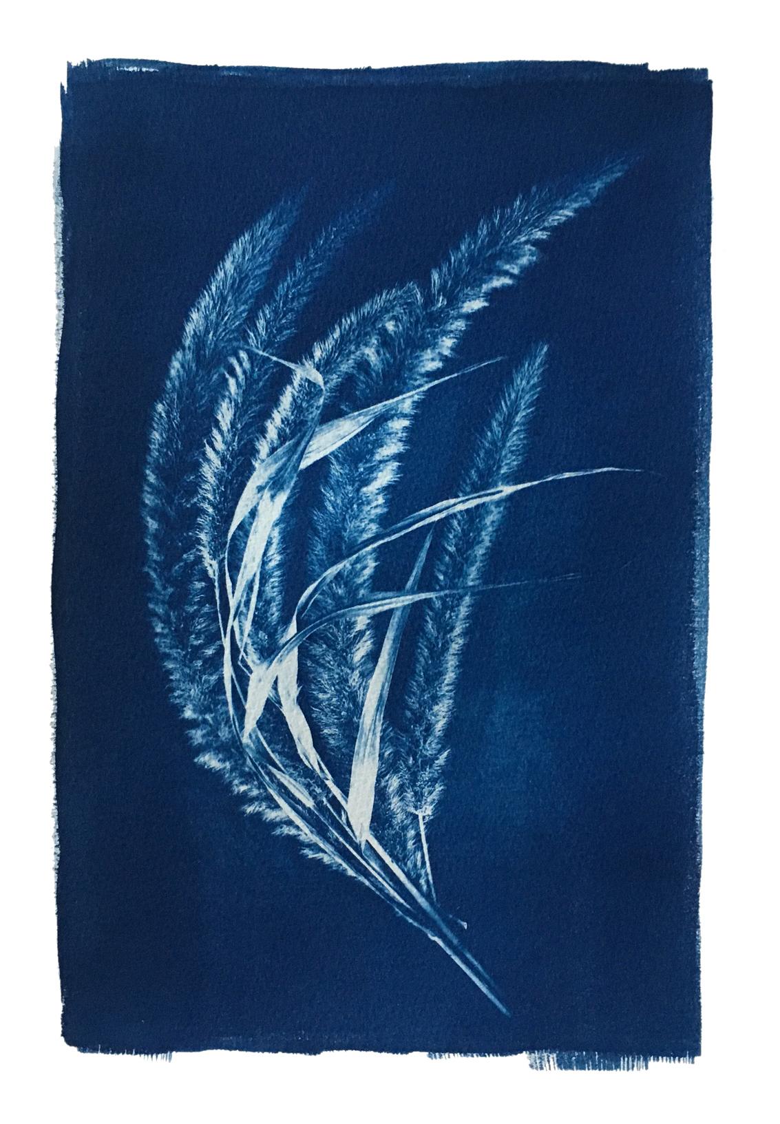 "TITLE /  Bristlegrass Fan  MEDIUM /  Cyanotype Print, Printed on 100% Cotton Paper  SIZE /  10"" x 14""  PRICE /  $375.00"