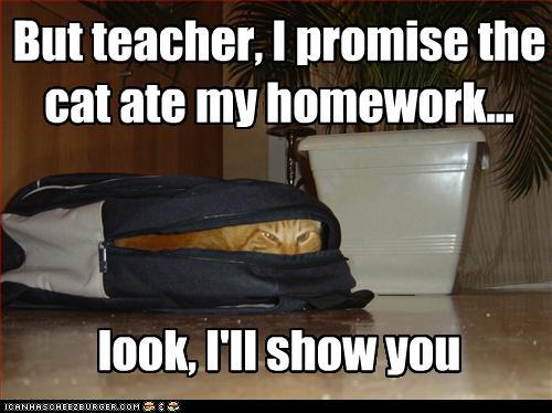 cat-ate-my-homework-.jpg