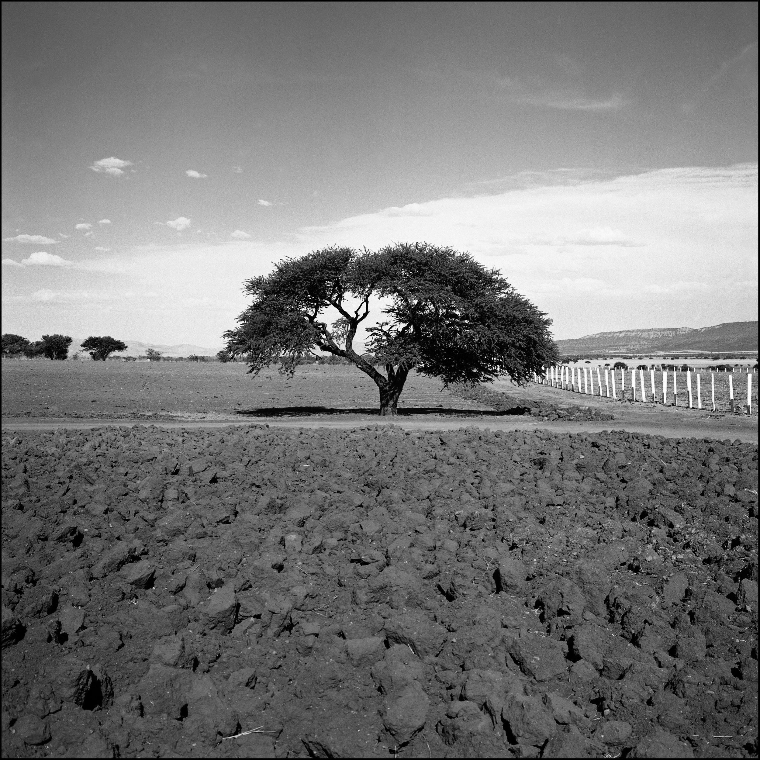 tree_101119B .jpg