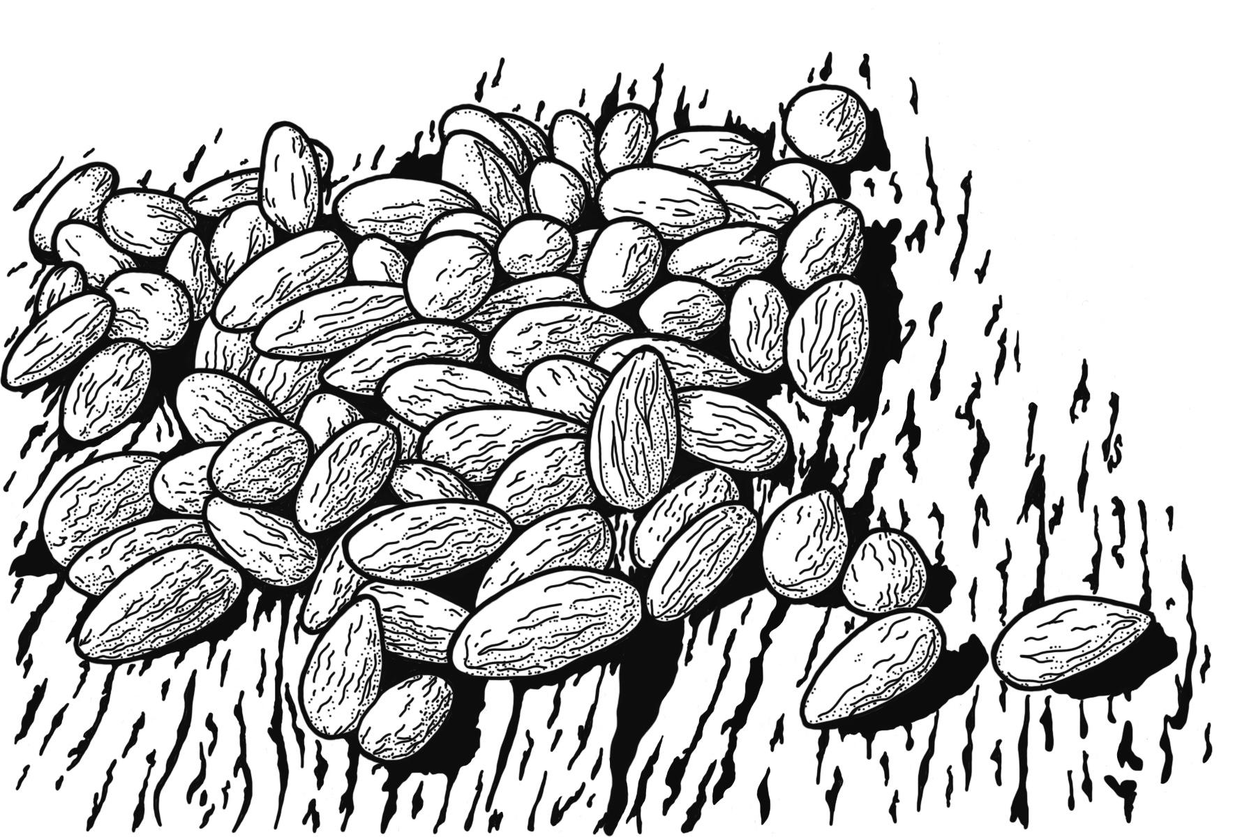 Ra Soap Ingredient: Almonds