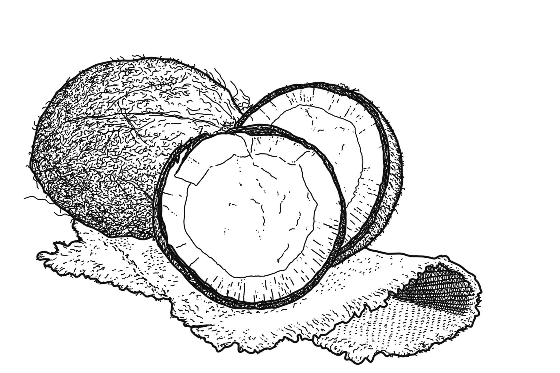 Ra Soap Ingredient: Coconut