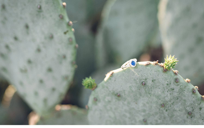 O'Gara-Engagement-Blog---4.jpg