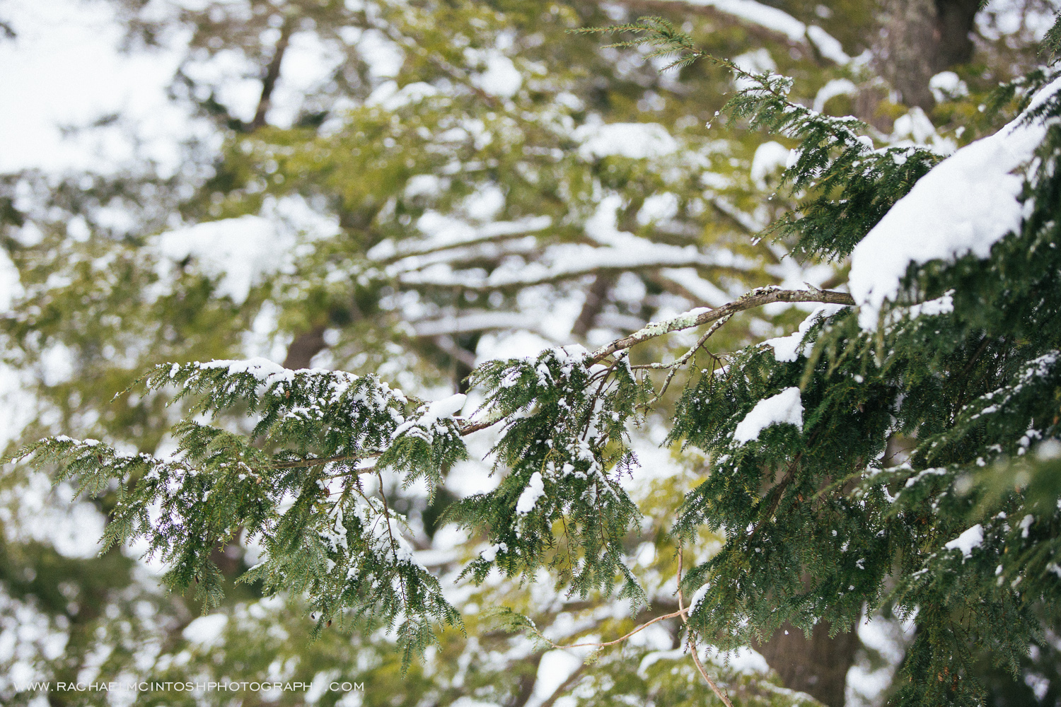 Asheville Engagement Session in the snow  -2.jpg