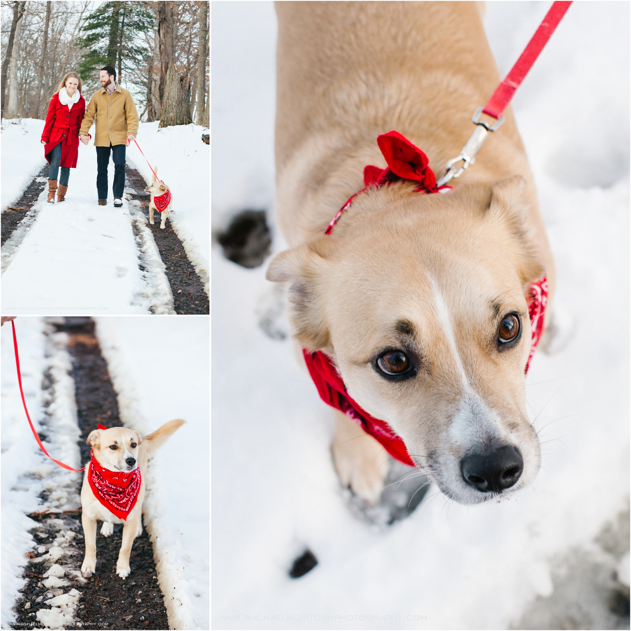 Asheville Engagement Session with Dog.jpg