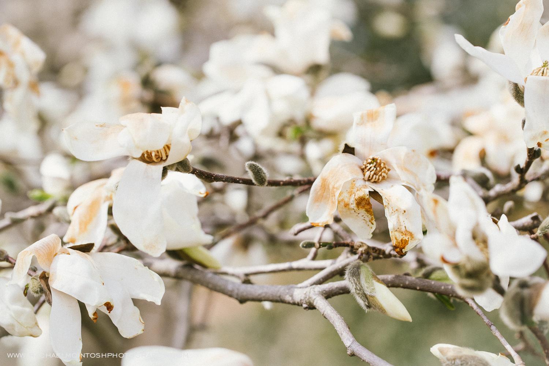 Spring Engagement Session-Asheville Wedding Photographer 1.jpeg