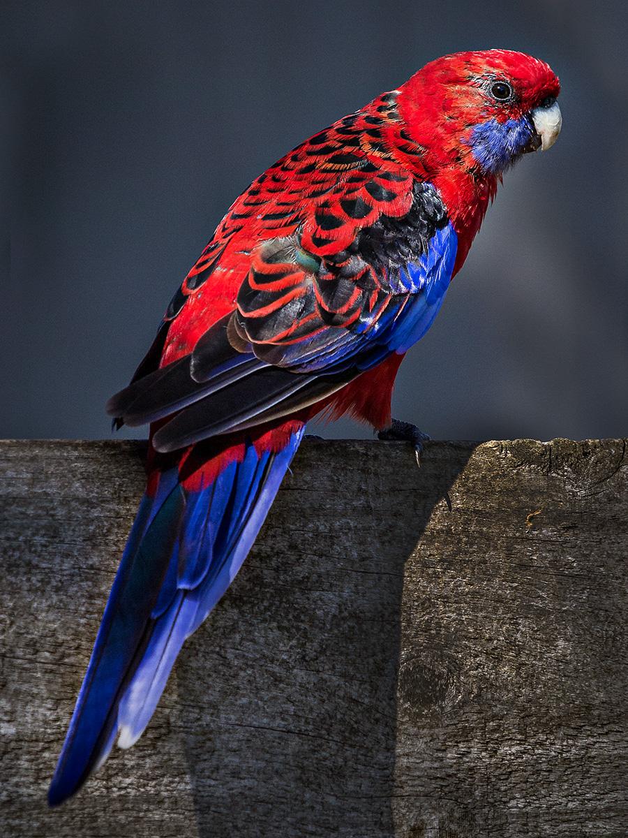 20140314 Sandy Point Birds (8).jpg