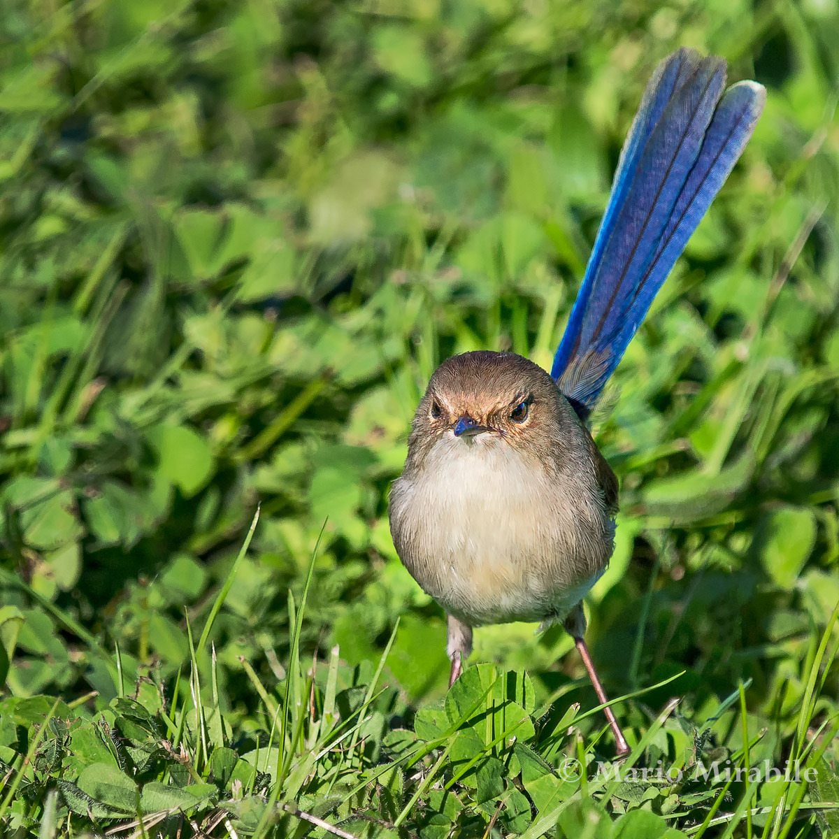20140803 kARKAROOK BIRDS (5) copy.jpg