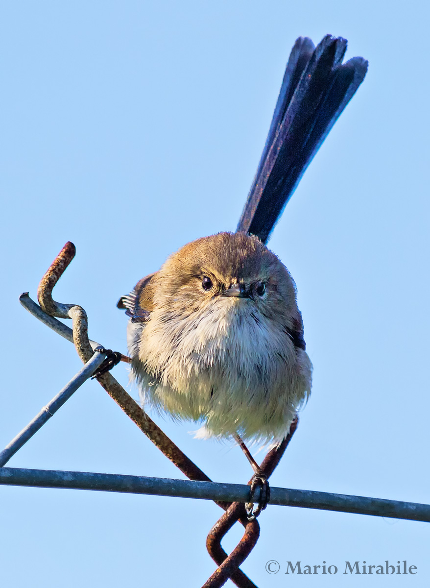 20140803 kARKAROOK BIRDS (17) copy.jpg