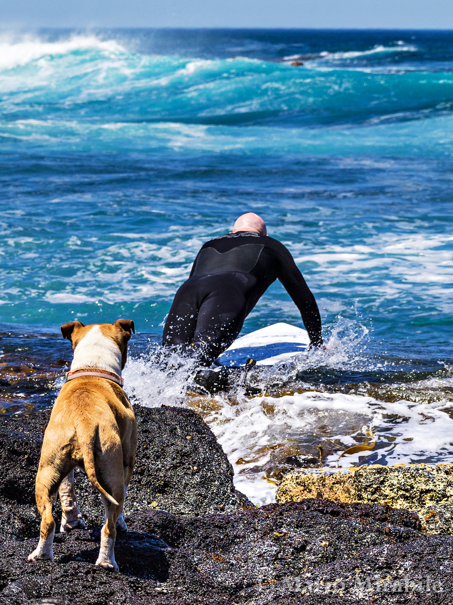 20141107 Surfs up (68) copy.jpg