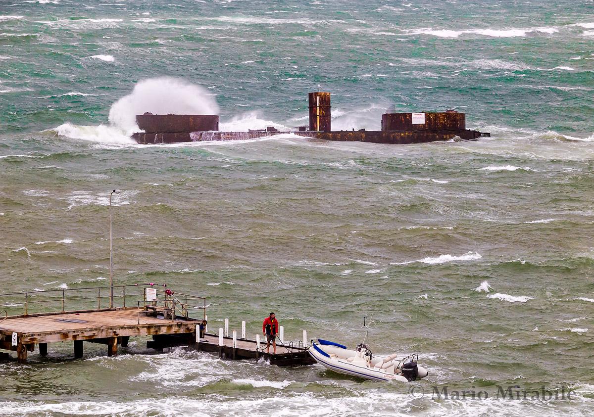 20141229  Windy on the bay (22) copy.jpg