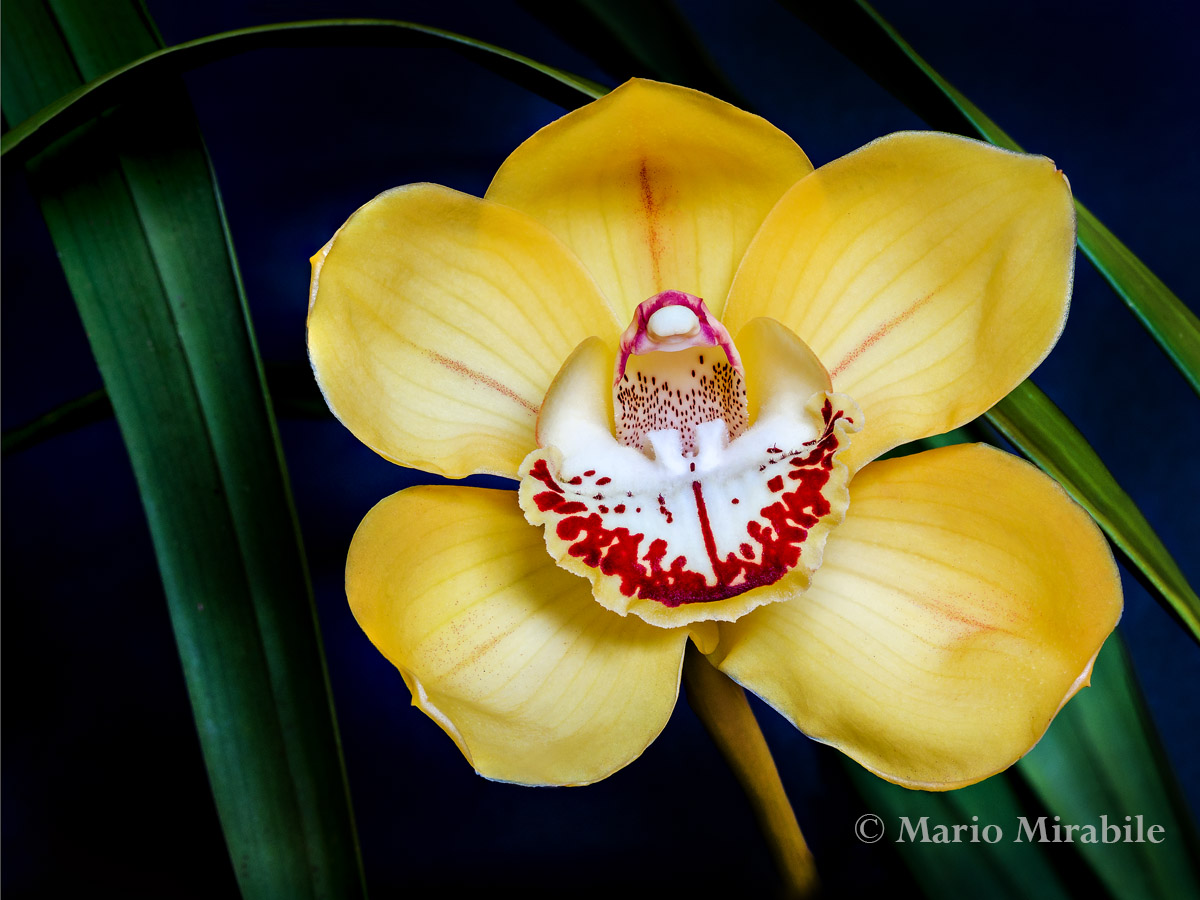 Orchid 1 copy.jpg
