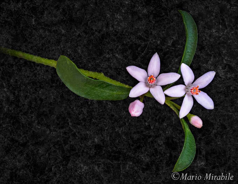 20170914 Flowers (17) copy.jpg