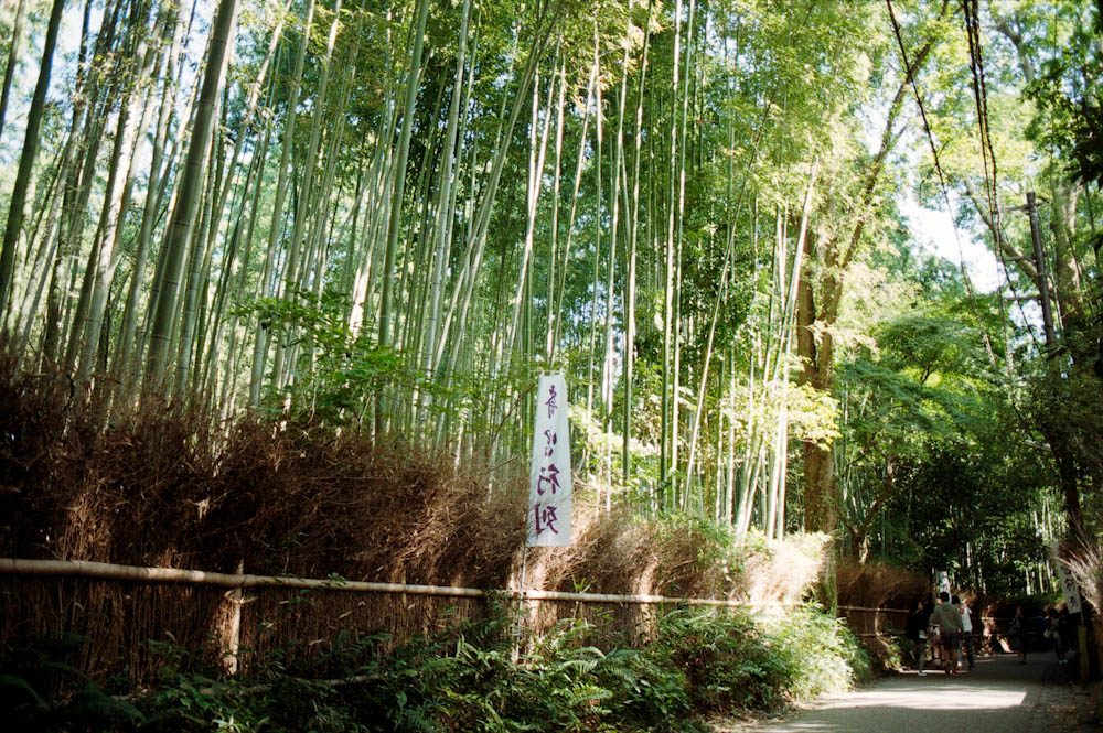 In the Arashiyama area just outside of Kyoto, there is a bamboo forest.