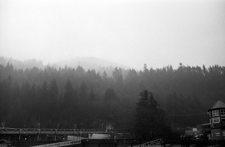 Lighthouse-Park-Vancouver-15.jpg