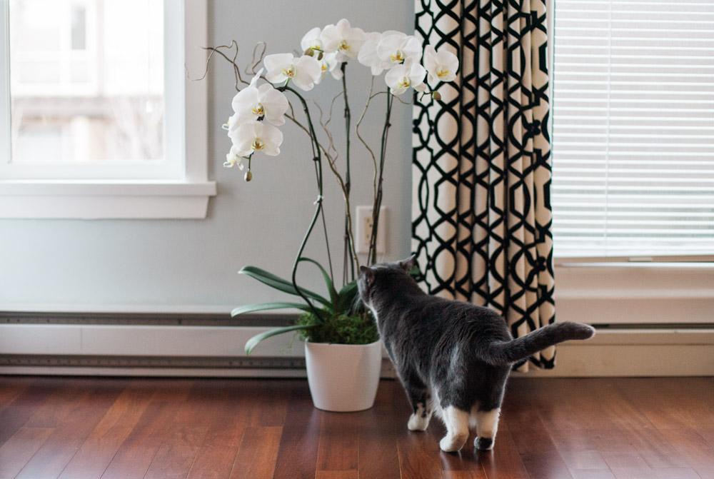 Tallie The Cat-21.jpg