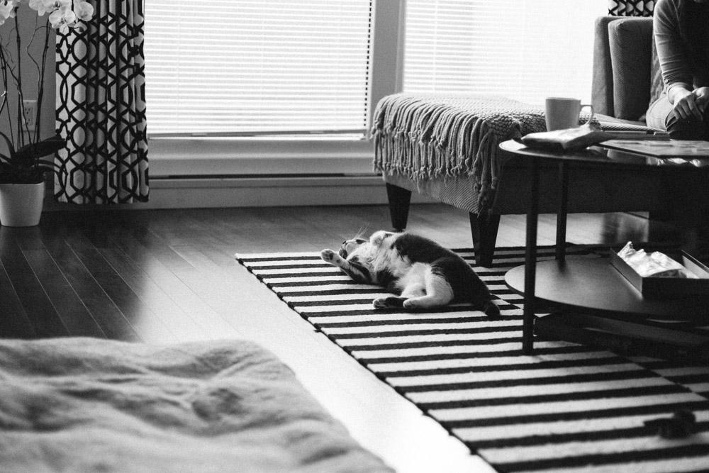 Tallie The Cat-39.jpg