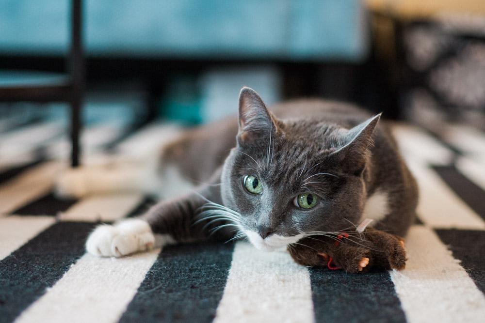 Tallie The Cat-42.jpg