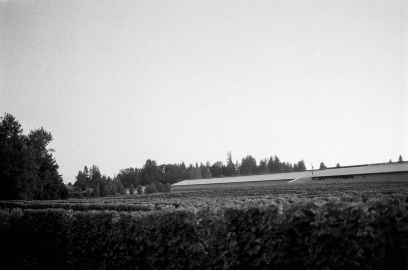 Abbotsford Single Tree Winery-51.jpg