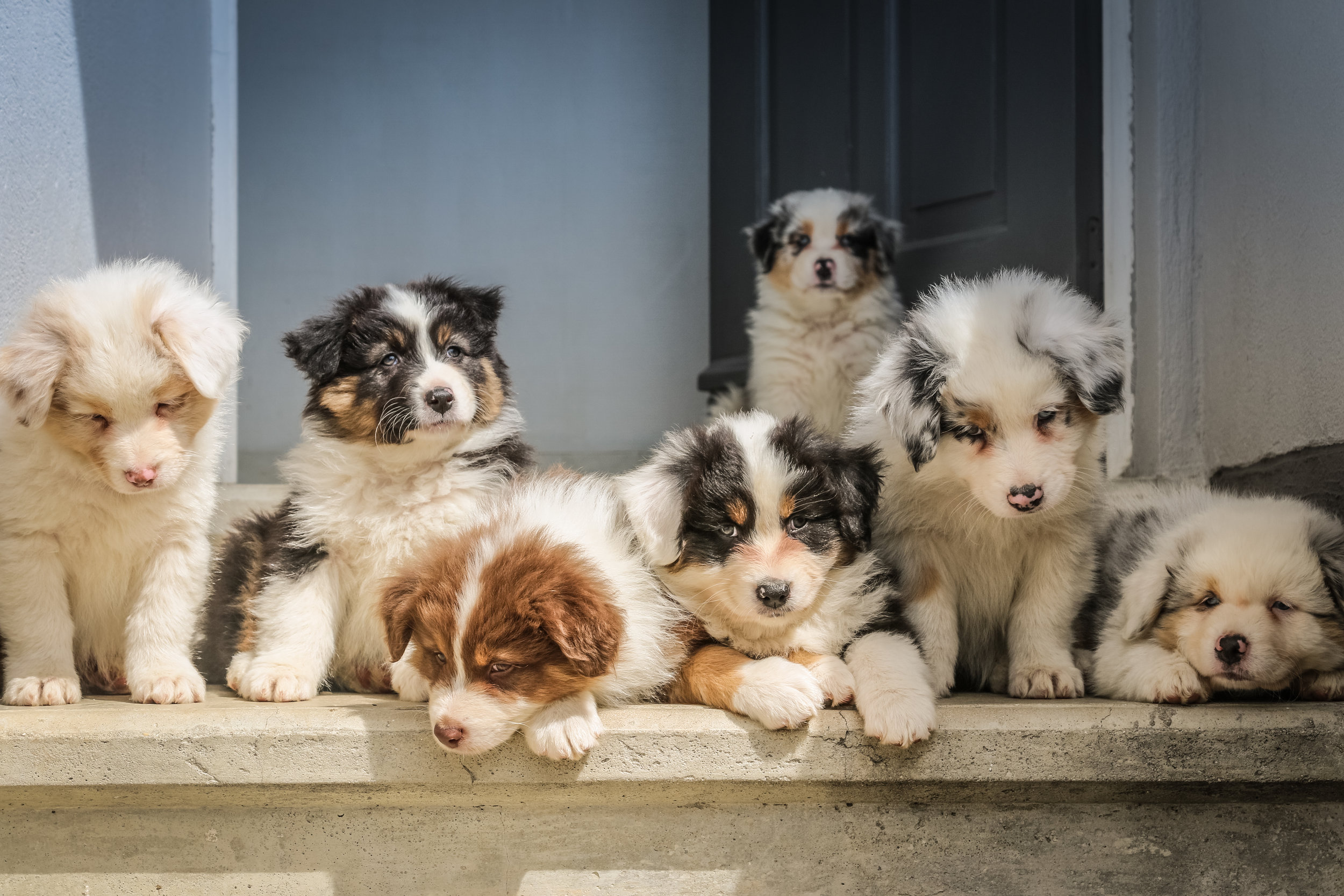 These puppies know what's what!