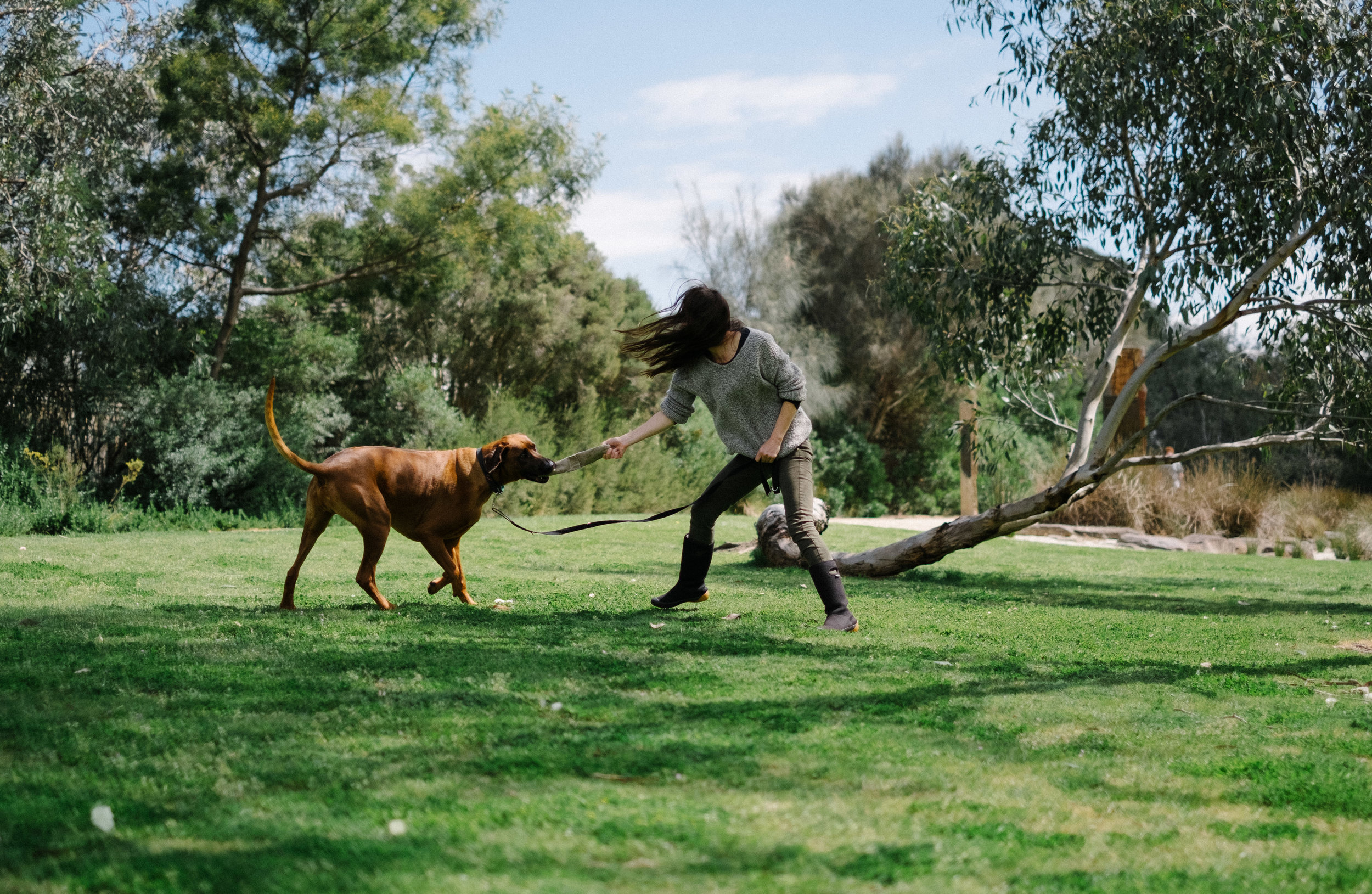 Melanie Norgate Provides at-home, personalised dog training