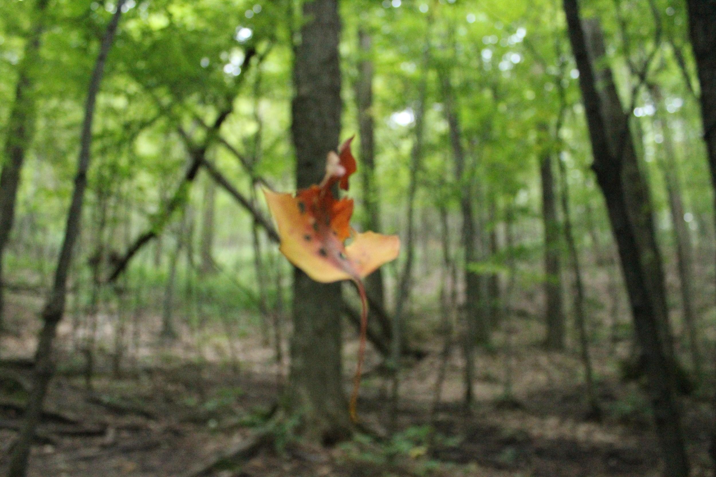 Fall leaves, leaves fall...