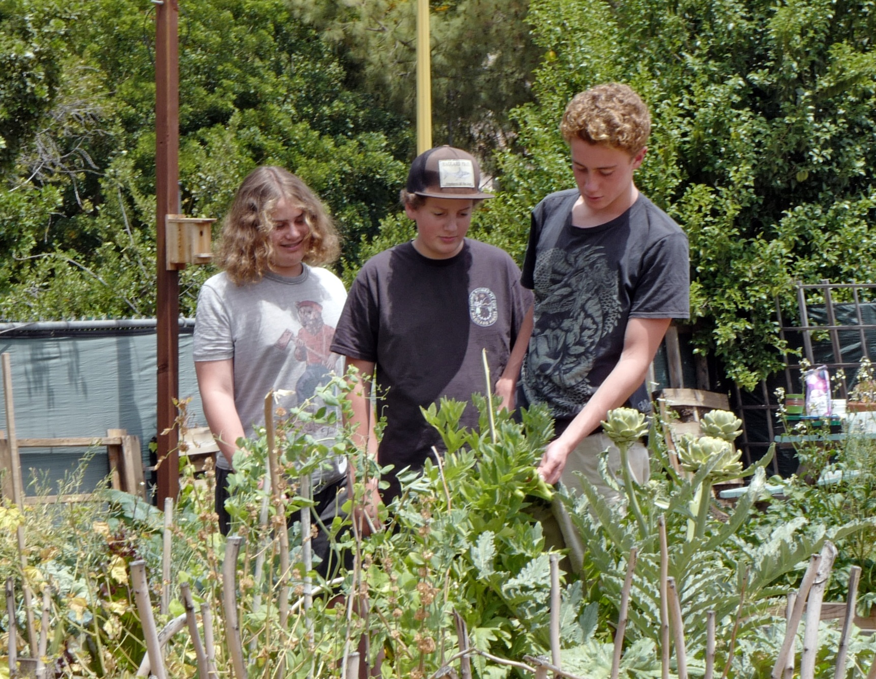 Student work the garden and harvest, cooking meals with their bounty.