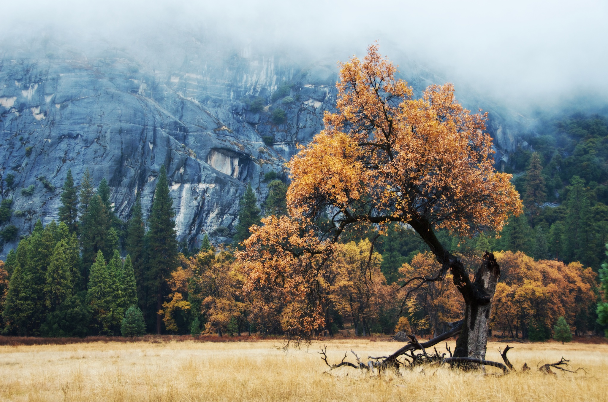 Tree In The Valley