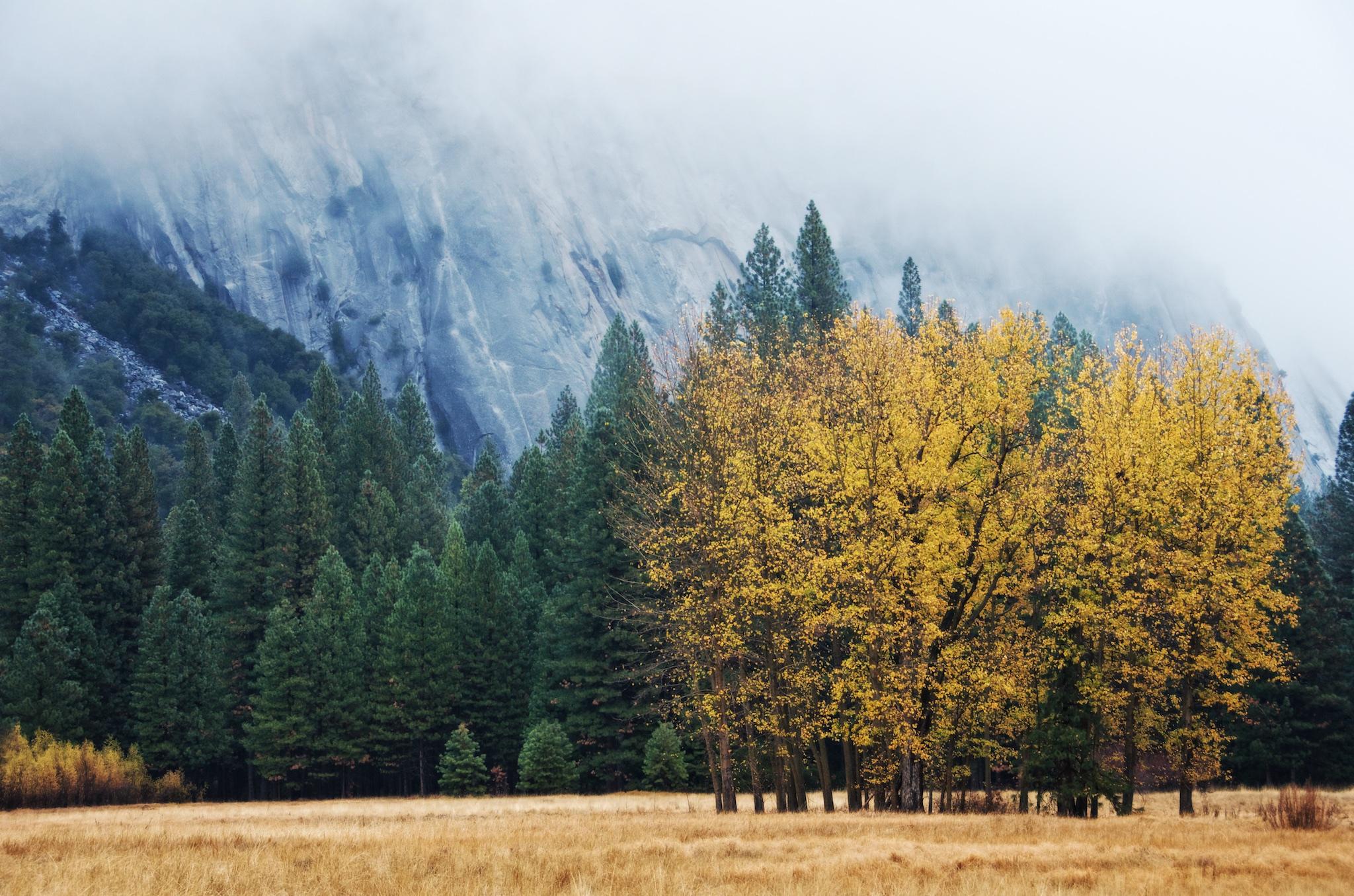 Fall Colors in Yosemite