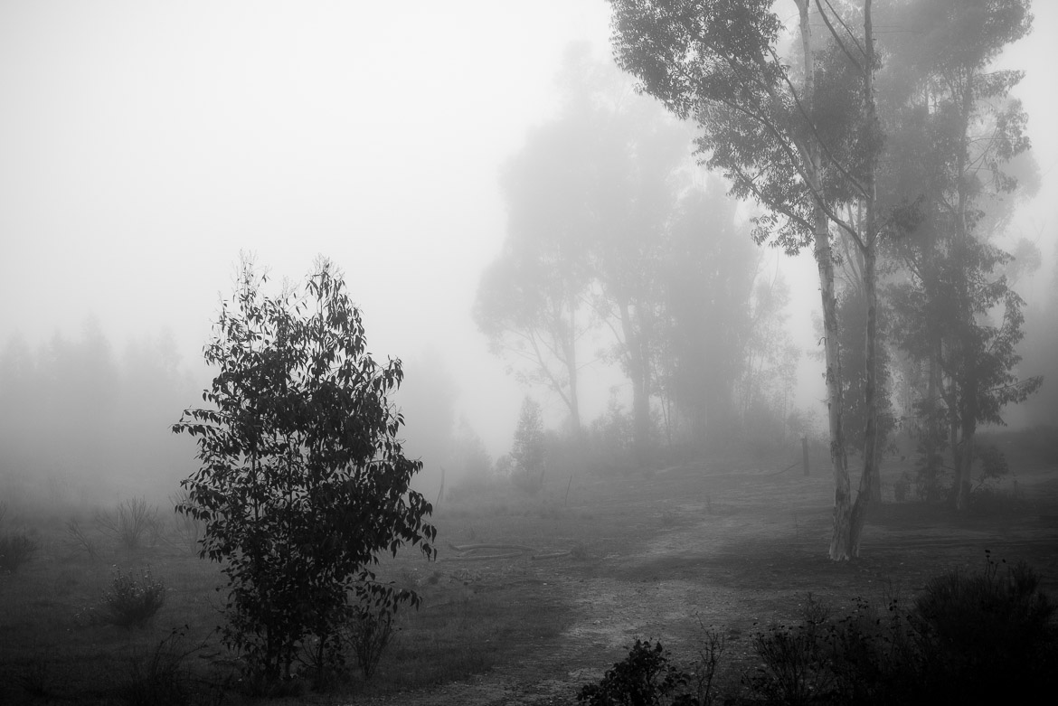 Trail Into The Fog