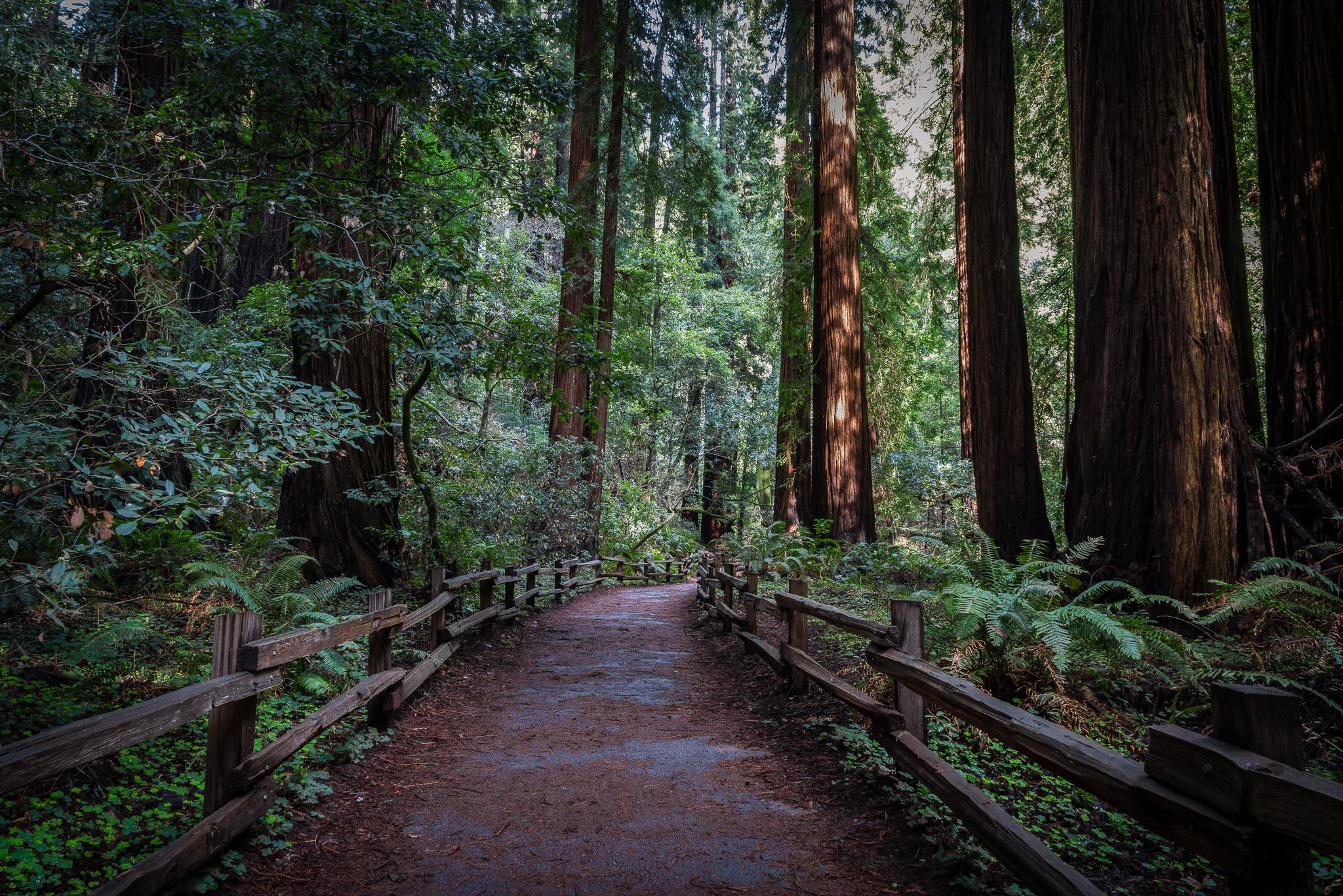 Scott-Davenport-US-California-Marin-Headlands-2016-01-24-0003-.jpg