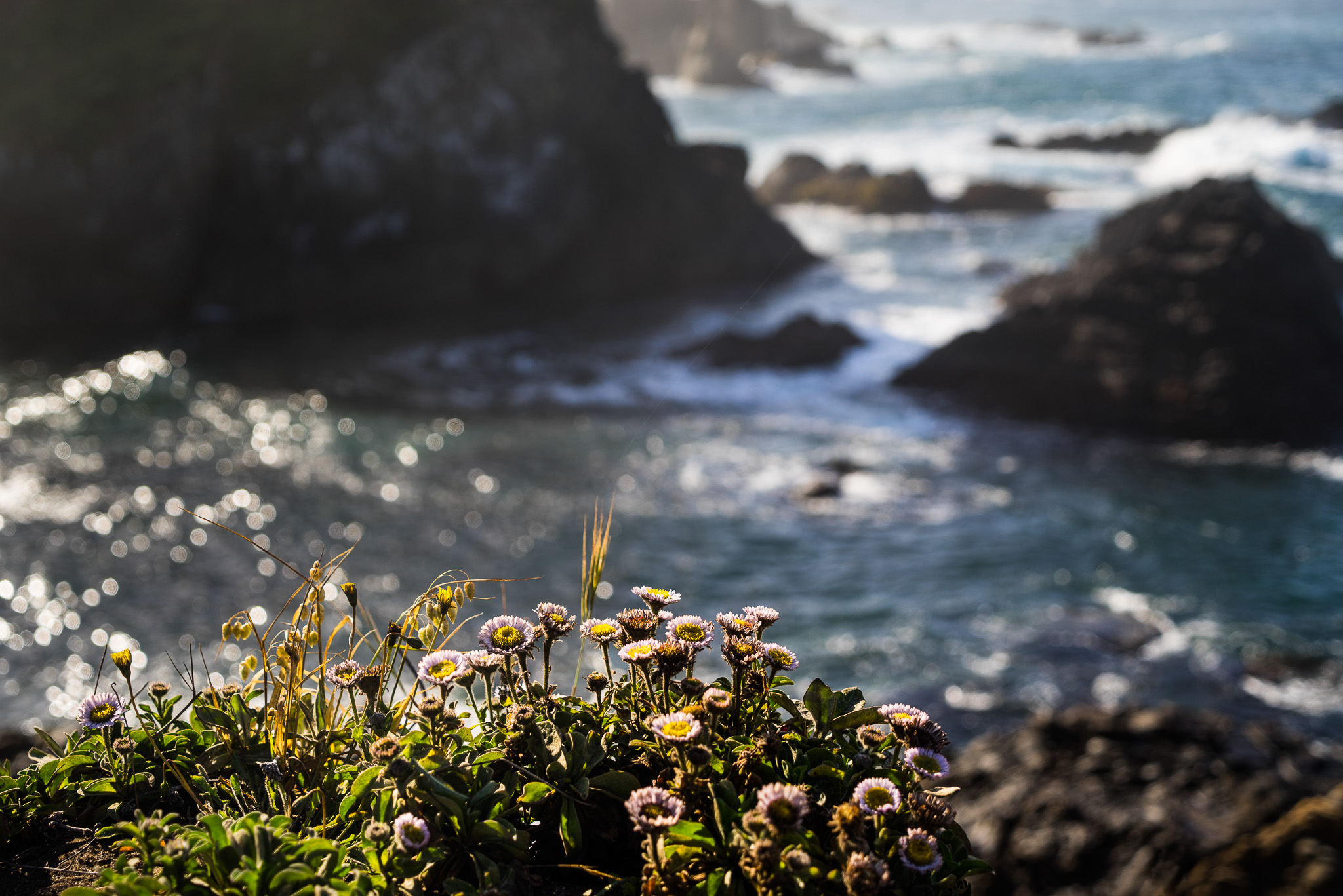 Blooms And Rocks