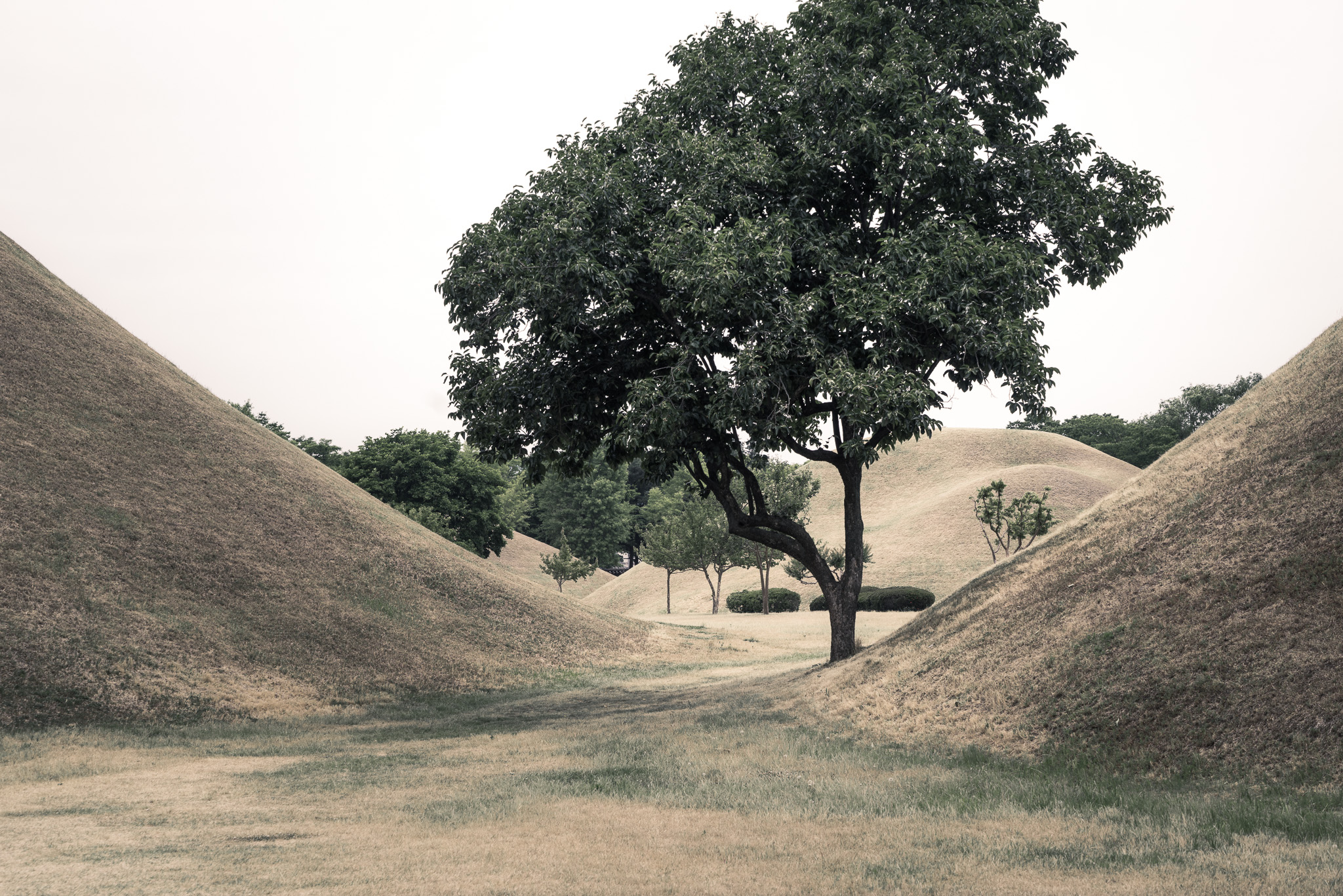 Trees And Tombs