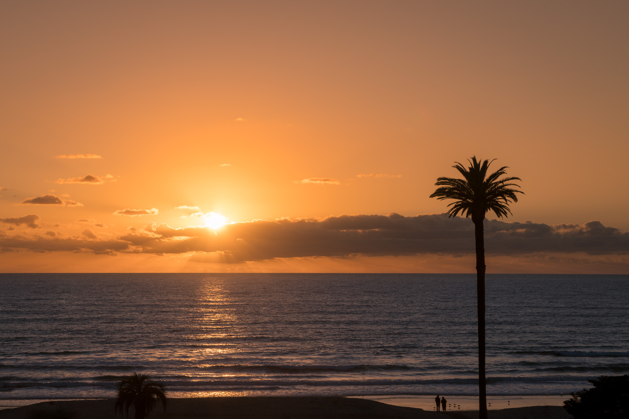 Palm At Moonlight Beach