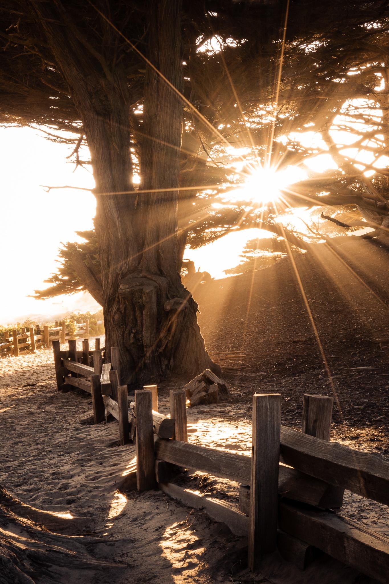 Sunbeams on the path to Pfeiffer Beach