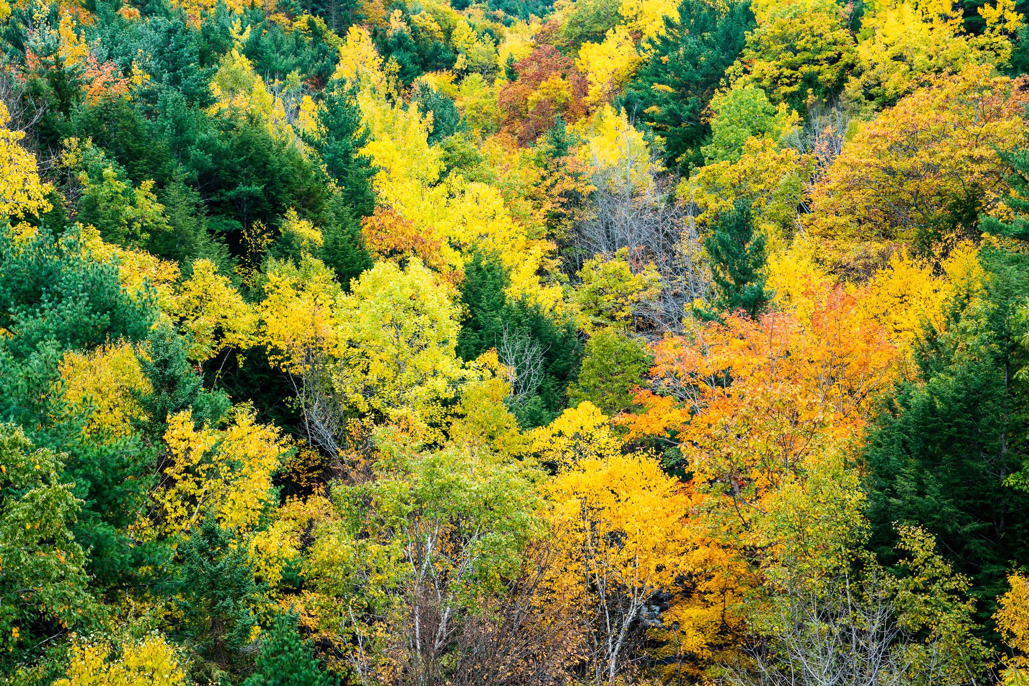 Fall color, Acadia National Park
