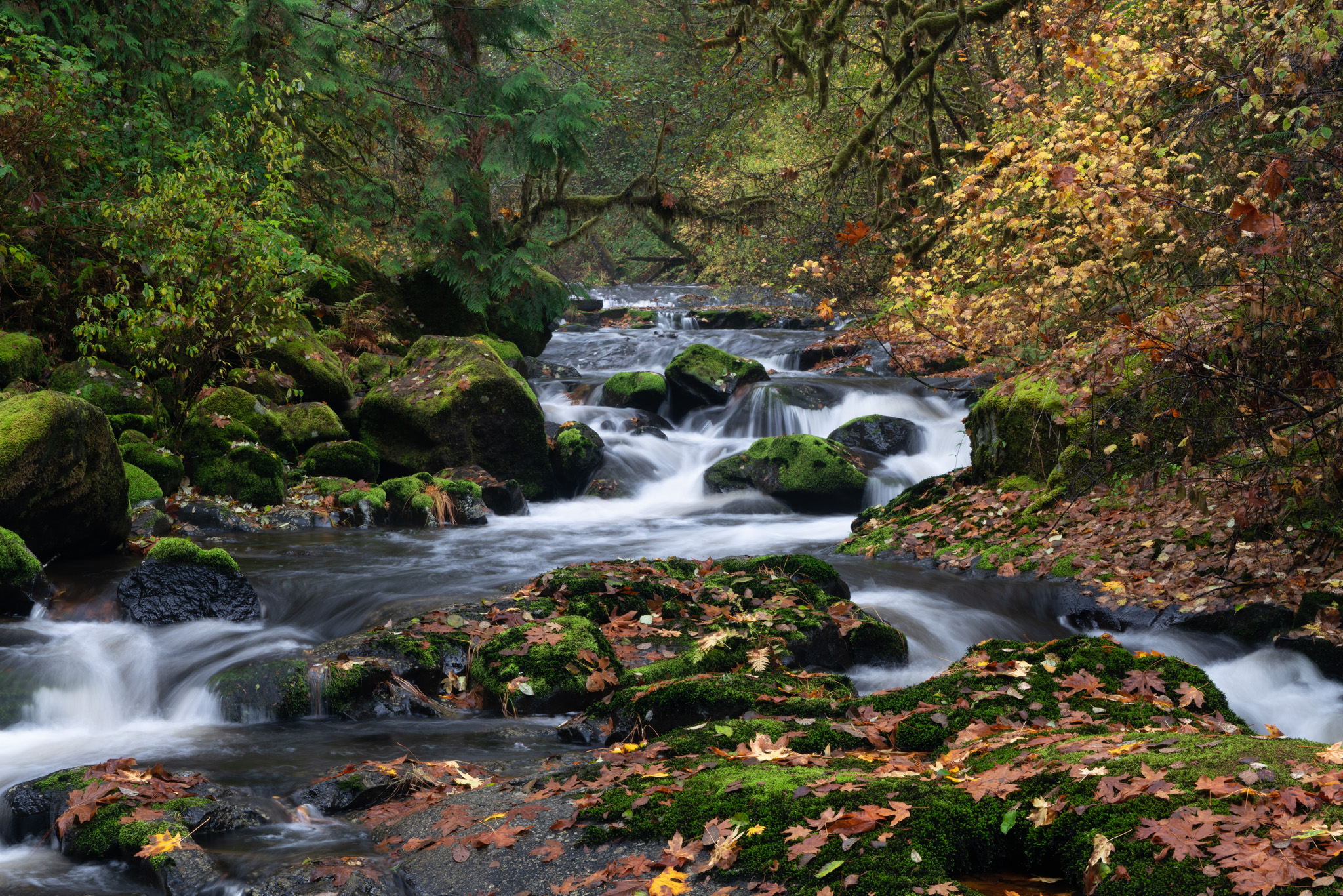 Sweet Creek, Oregon.  Contact Scott to commission a print or license this image.