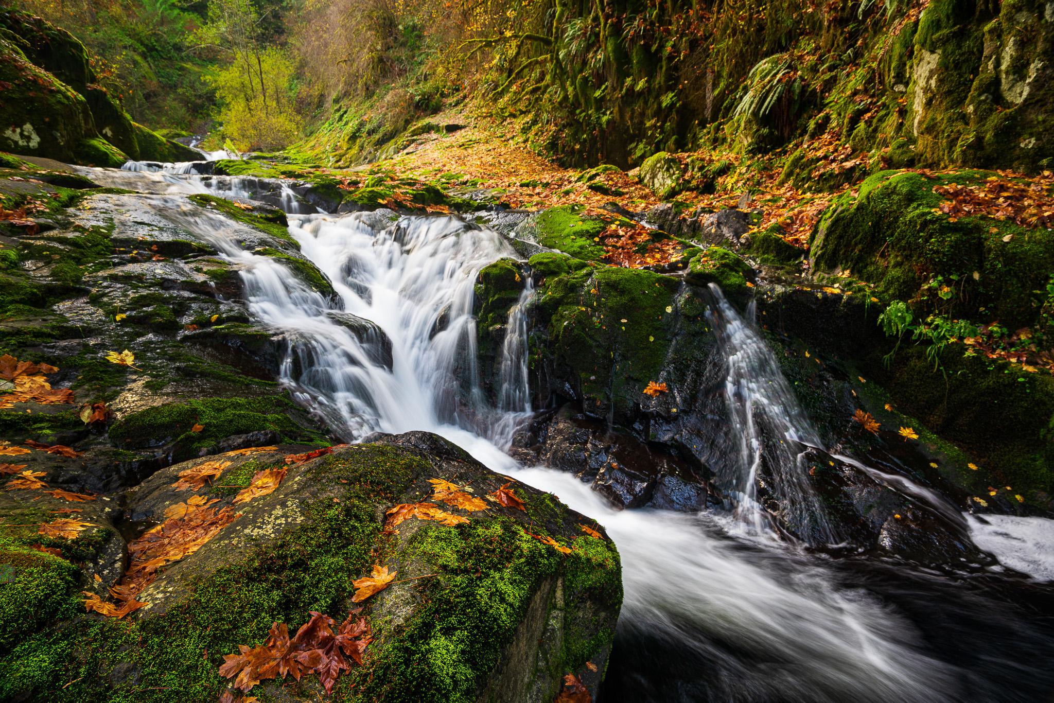 Along Sweet Creek In Oregon
