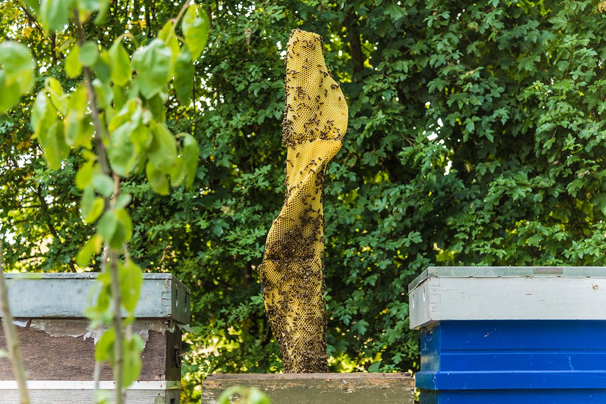 Endless Column / June 2017   Year : 2017  Materials : beeswax, plaster, PLA  Dimensions : 300 x 300 x 650 mm ( w x d x h )  Beekeeper collaboration  : Jelte Pieter Dijsktra