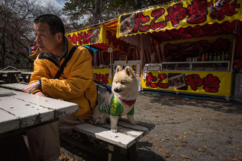 Un altro cane incredibilmente stiloso, all'interno del parco del castello.