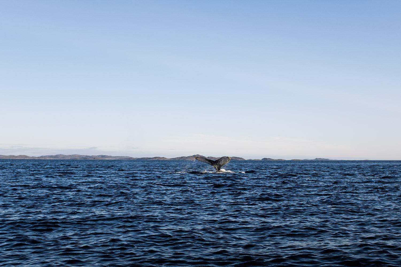 ciao sono *verso della balena*